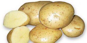 сорт картофеля удача характеристика