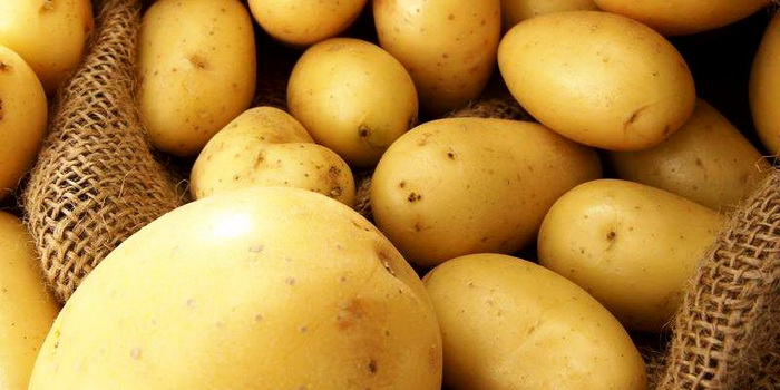 """картофель """"удача"""" описание сорта фото отзывы"""