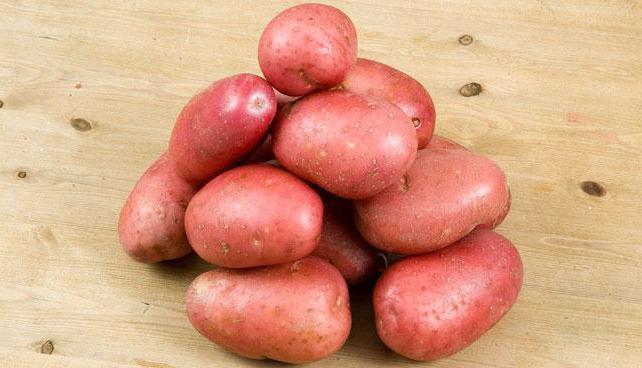 фото картофель журавинка описание сорта фото один