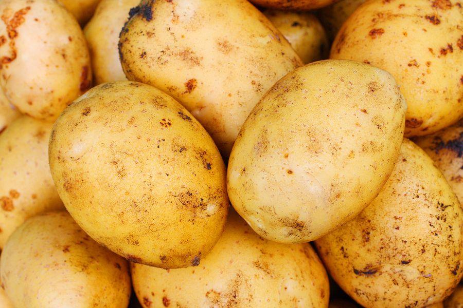 Картофель адретта описание