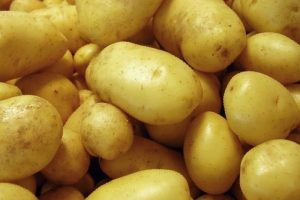 гала картофель характеристика