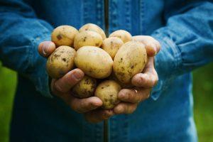 коломбо картофель описание