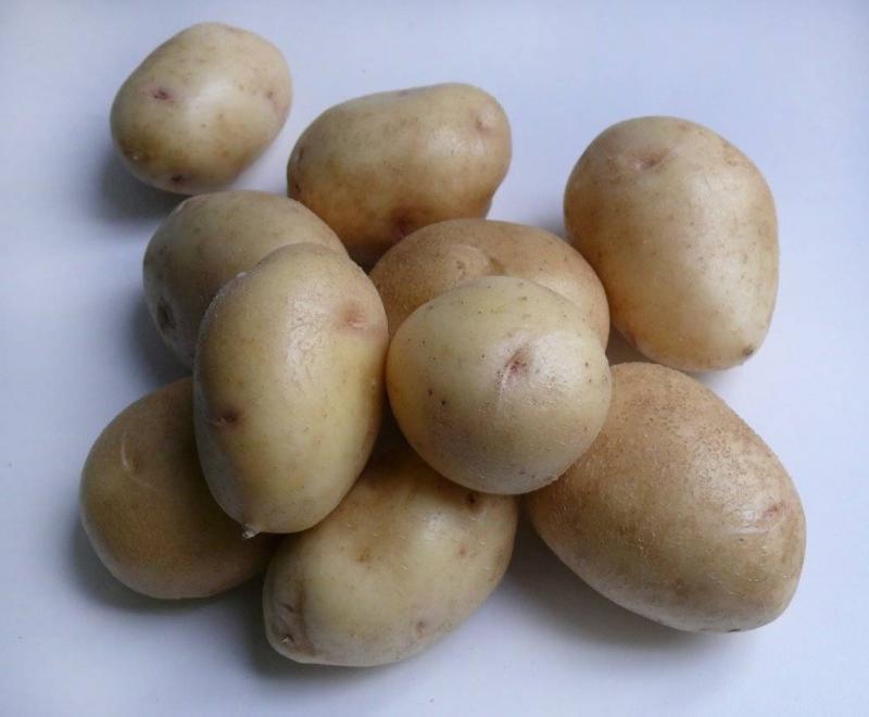 сорт картофеля невский