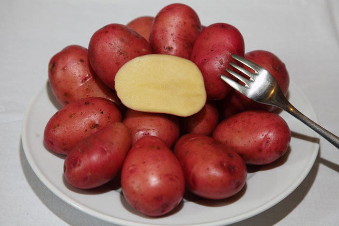 картофель розара описание сорта фото отзывы