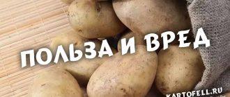 картофель польза и вред